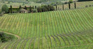 Fontodi vineyard, Chianti